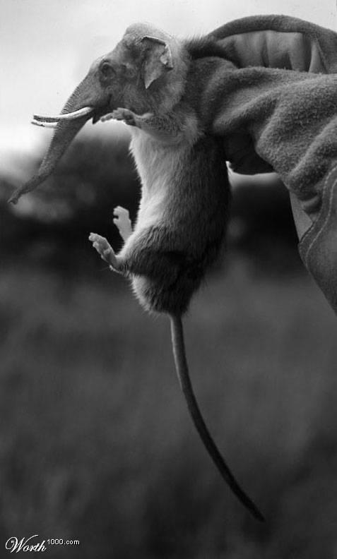 animales alterados unas 100 imagenes creo